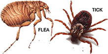 Flea and Tick Control at The Family Pet